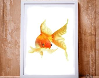 Fish Print, Gold Fish Print, Fish Wall Art, Kids Room Decor, Beach Decor, Fish Decor, Fish Poster, Coastal Wall Art, Fish