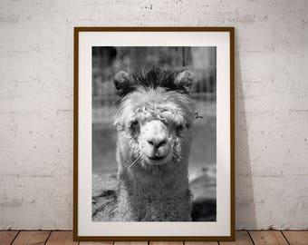 Llama-Llama Print-Llama Gift-Llamas-Farm Animal Print-Desert Printable-Kids Art Print-Digital Prints-South American print-Llama Lover