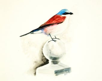 Bird art/Red backed shrike watercolour painting/A4/Giclee print/Nursery art/bird/home and office decor/bird art/bird painting
