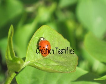 Nature photograph - Ladybug on a Leaf