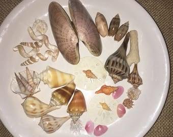 Various seashell arrangement
