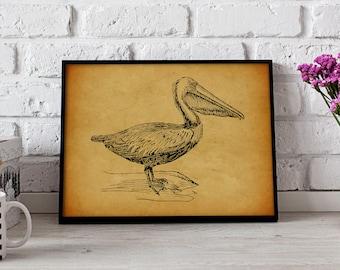 Pelican Bird Vintage poster, Pelican Bird wall art, Gift poster, Pelican Bird Vintage wall decor, Pelican Bird print