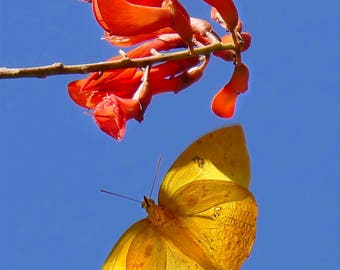 Original fine art photography print - Red flower and yellow butterfly