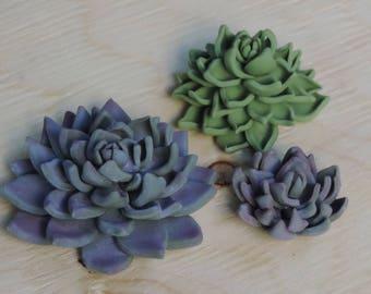 Succulents 3 pc.