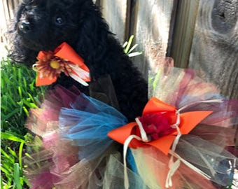 Fall Thanksgiving Dog apparel for small and large dogs