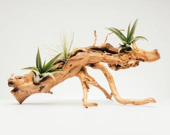 Natural Wood Branch Centerpiece & Planter - Home Decor Gift Idea Tillandsia