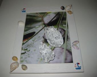 decorative Medallion oyster shells