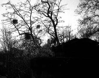 Print of abstract art - Vegetation - Paris father Lachaise vegetation in winter