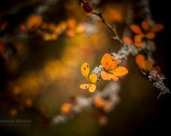 Orange Fall | photo print | Limited edition | 30 x 20 cm or 45 x 30 cm