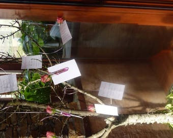 On a tree with natural rose table plan