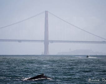 Photograph of a whale near the Golden Gate Bridge in San Francisco
