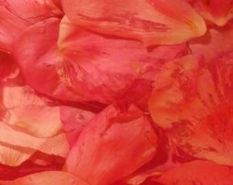 """Photo, photography, photography, photo, photography, """"Rose petals"""""""