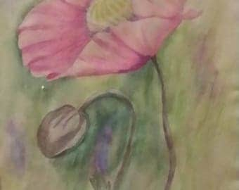 Pink poppies with bud