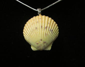Scallop Shell Pendant