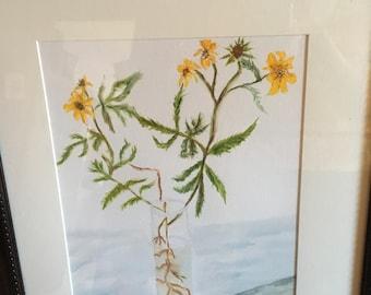 Watercolor painting in vase; roadside flowers