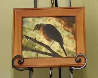 Framed Photograph of a Robin