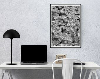 Black and White Patterned Nature Photo Paper Poster (Unframed)