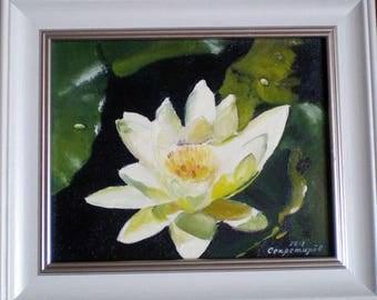 pond flower lily