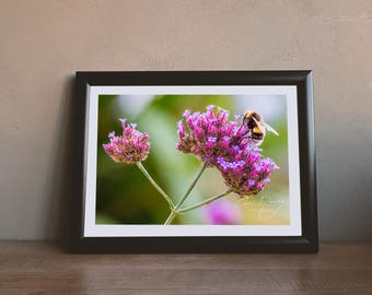 Close up of a bumble bee on a pink flower. Photo Wall Art Print