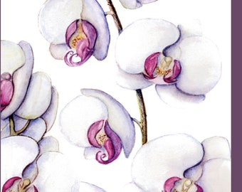 Fine Art Botanical Greeting Card - Moth Orchid