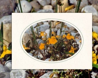 88.08 Wild Mountain Snapdragons Individual Note Cards