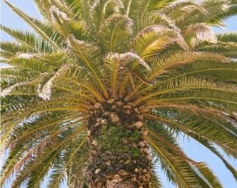 Palm Tree Canvas Gallery Wrap, Santa Monica Beach Photo, California Photography, 16x20 to 32x48 Inch Large Wall Art Canvas Print