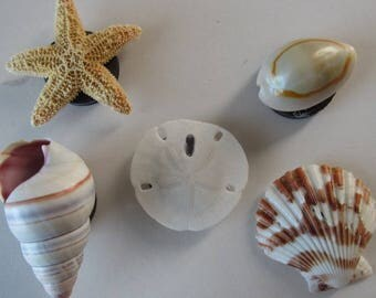 Refrigerator Magnets, Set of 5 Seashell Magnets, Office Note Holders, Locker or Dishwasher Magnets, Picture Letter Paper Holders for Fridge