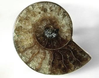 Sale: Sterling Silver and Ammonite Fossil Ring Size 8