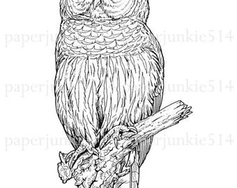 Owll Printable Clip Art  - Owl - HHH - Digital Download - JPG - PNG Image - Illustration