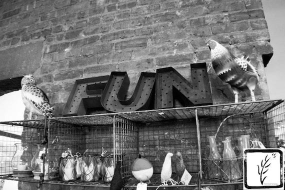 """""""Fun with Birds,"""" Ben's Garden, Huntington, New York, 2017."""