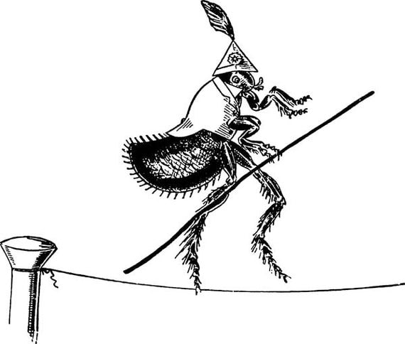 circus flea bug on tightrope png clipart digital stamp Digital graphics Images Download cartoon bugs