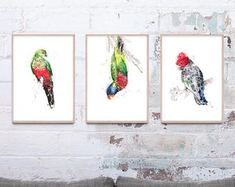 NEW Set of 3 Australian Bird Art Prints, Set of 3 A3 giclee prints, Trending art