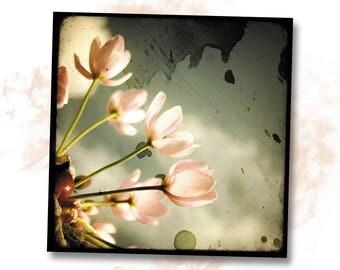Romance Rose - Nature - photo art signed 20 x 20 cm