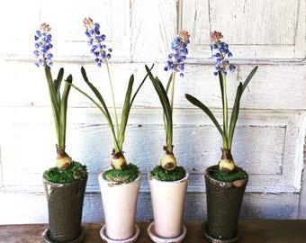 Potted Hyacinths Life Like