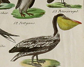 1842 set of 2 ANTIQUE BIRD PRINTS,hand colored engravings,Emu,Pelican,Ostrich,duck,Europe,rust,gray,red,yellow,pink,green,black,blue