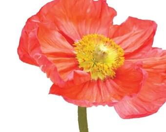 Orange Poppy with stem Garden Flower - Vinyl Decal Wall Décor