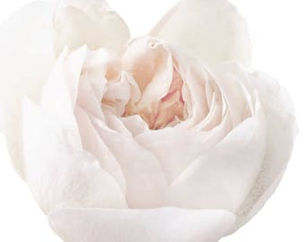 White Rose Bud Garden Flower  - Vinyl Decal Wall Décor