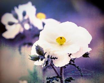 Purple, poppy, flower, gift for mom, gift for women, poppy flower, bedroom art, green, large wall art, purple girls room, white flower art