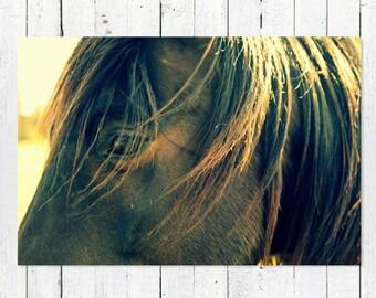 Horse Photography | Horse Art | Horse Photography Prints | Horse Photography Art | Farmhouse Art | Brown Horse Western Decor | Equine Photo