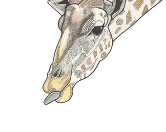 Giraffe print A3 print illustration animal illustration funny drawing