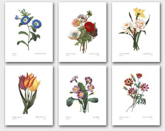 Flower Print Set of 6, Spring Home Decor (Redoute Botanical, Colorful Wall Art) --- Daffodils, Tulips, Poppy Aneones and more -- SALE
