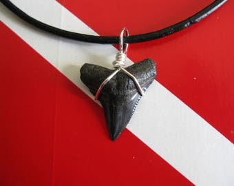 Shark Tooth Necklace, Fossil Bull Shark tooth, Peace River-Arcadia, Florida, Leather cord, Silver plated wire