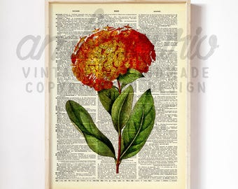 Bright Jungle Flame Ixora Scarlett Bloom Botanical West Indian Print on an Anituqe Up-Cycled Book Page Unframed Artwork