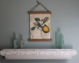 Botanical picture, home decor, Lemon Botanical Picture, Printed on Canvas