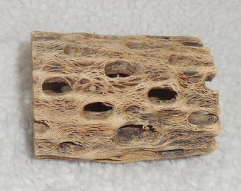 """Hard to find - Cholla Wood ~ 2"""" x 3"""" ~ Display Air Plants, Succulents, Cactus, Orchids  L"""