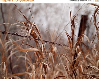 """ON SALE The Forgotten Barbed Wire Fence Fine Art Photography 11"""" X 14"""" Print, Old Country Fence"""