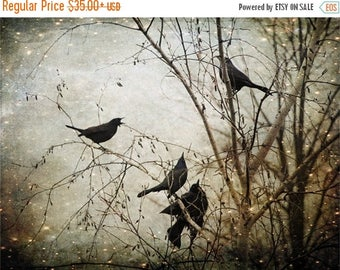ON SALE Unique Blackbird Wall Art, Fine Art Photography, Flock of Blackbirds, Black, Surreal, Enchanted, Large Wall Art
