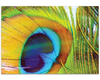 Contemporary Wall Art 'Peacock Colors' by Meirav Levy - Wildlife Decor Modern Peacock Artwork on Metal or Plexiglass