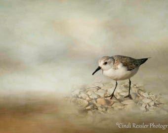 Sanderling, Shorebird, Bird Photography, Ornithology, Beach Photography, Bird Watchers, Fine Art Photography