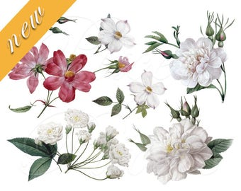 ROSES of Reduote collage wedding clipart Instant download, digital images, large pink white rose flower clipart
